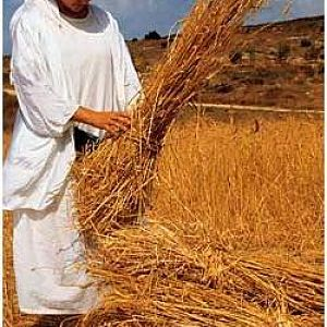 Binding Sheaves of Wheat